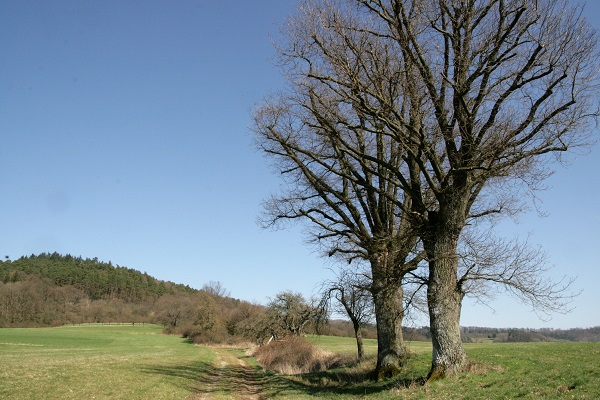 Weg Durchs Kopfeichenland Am Hetzleser Berg